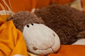 Dolly - unser Schlafschaf